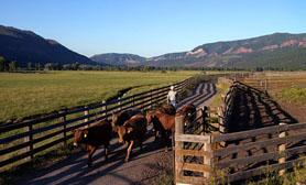 Durango Farming